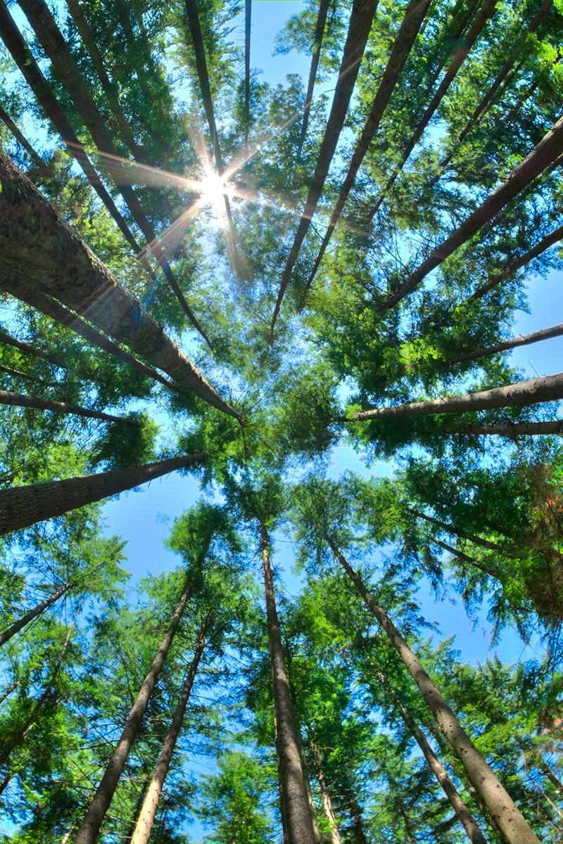 Plano nadir diurno de árboles.